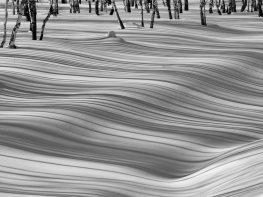 Alina Kiseleva Birch Forest